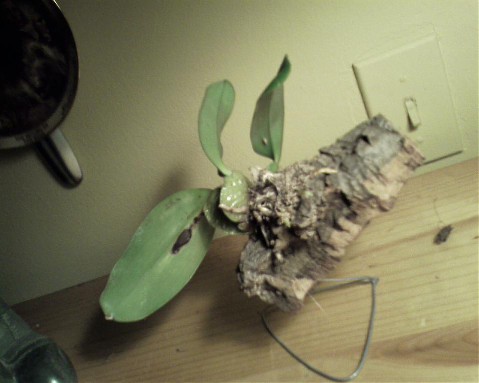 """Let's Play """"Name That Orchid""""!!-orchid-1-jpg"""