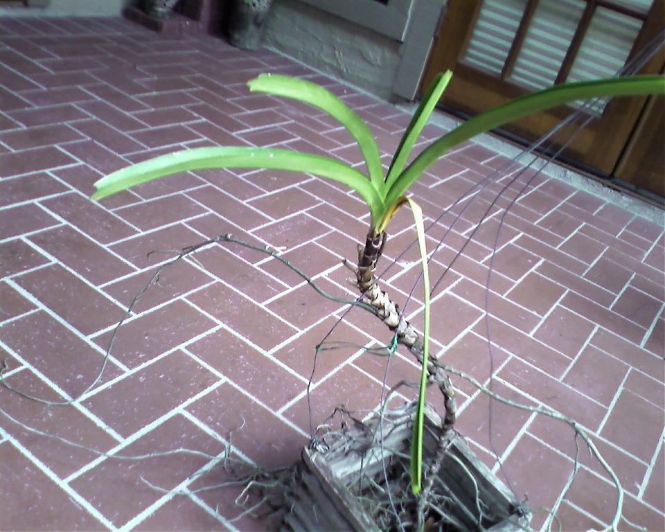 """Let's Play """"Name That Orchid""""!!-orchid-4-jpg"""