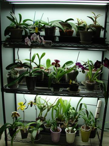My orchid rack :)-100807-114-jpg