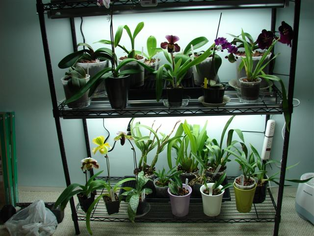 My orchid rack :)-100807-117-jpg