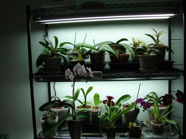My orchid rack :)-100807-118-jpg