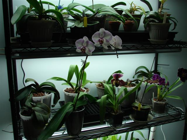 My orchid rack :)-100807-119-jpg