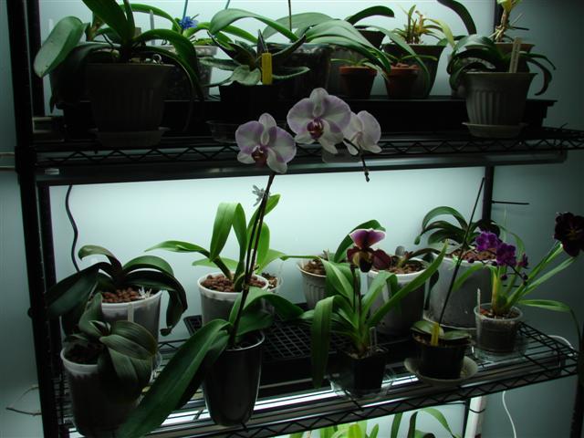 My orchid rack :)-100807-119-jpg