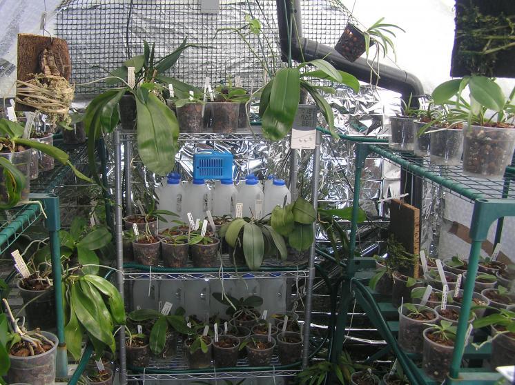 my small summer greenhouse-p2280233-jpg