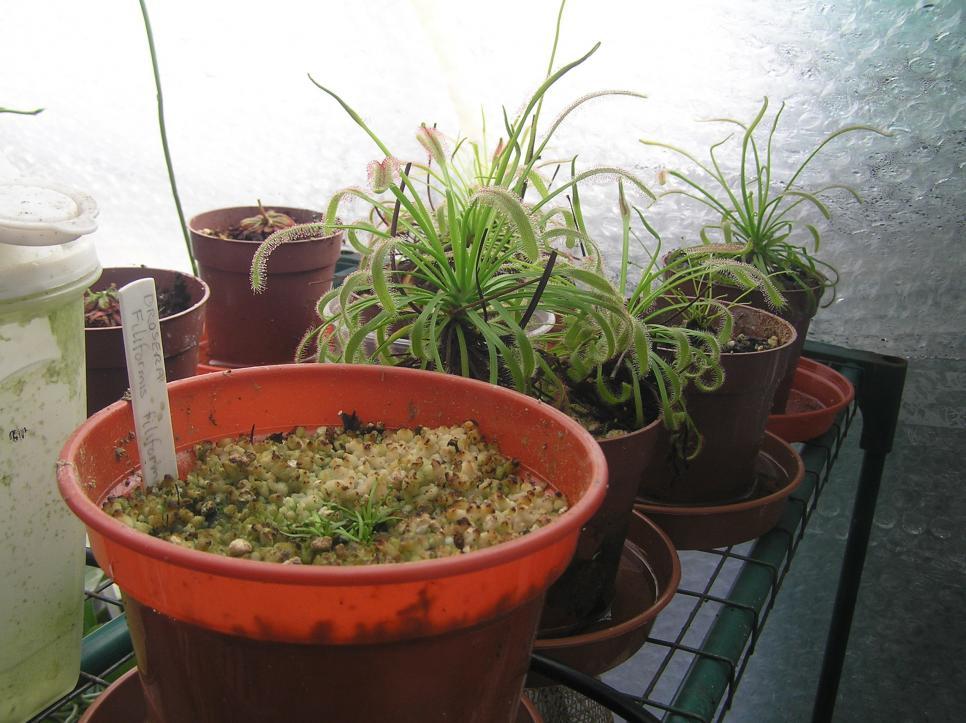 my small summer greenhouse-p2280234-jpg