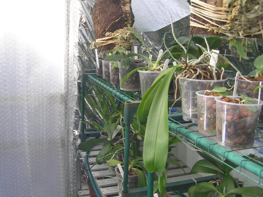 my small summer greenhouse-p2280235-jpg