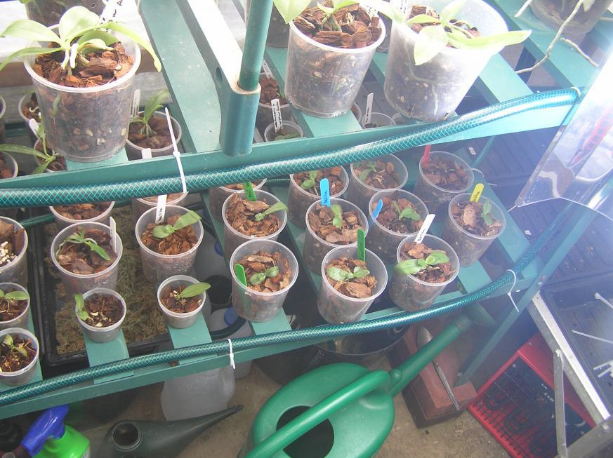 my small summer greenhouse-p2280237-jpg