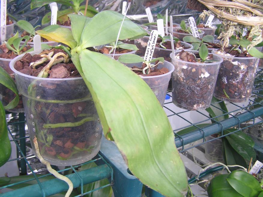 my small summer greenhouse-p2280239-jpg