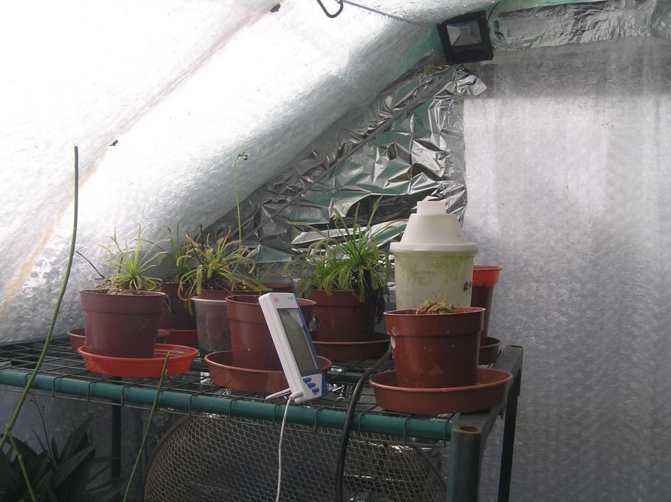 my small summer greenhouse-p2280242-jpg