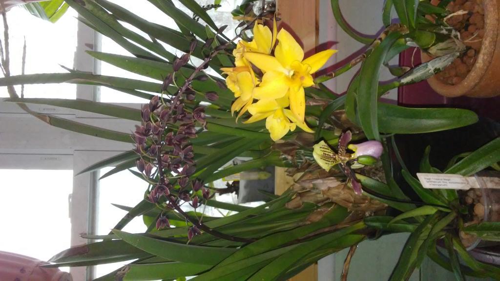 A few things in bloom.....-20170327_091417-jpg