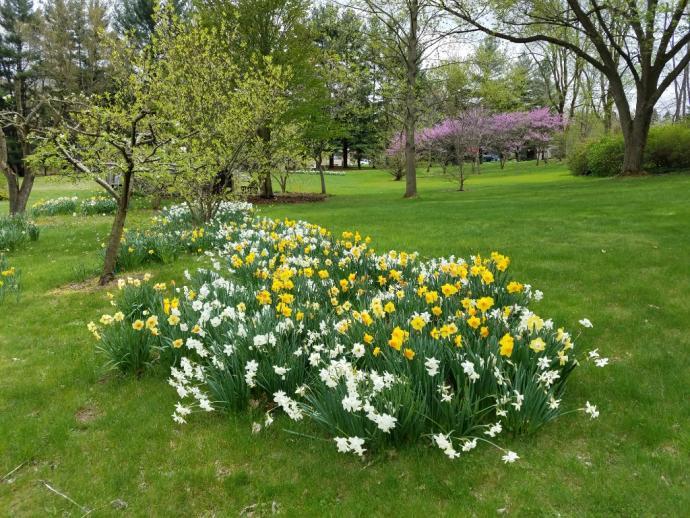 Spring-14928124612639-jpg