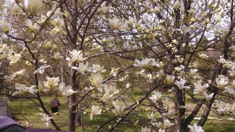 Spring-14928173501552-jpg