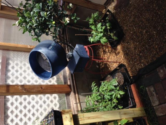 New Greenhouse-img_2571-jpg