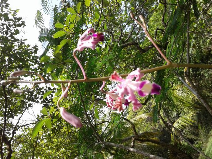 Rio Dulce Morning Coffee Stroll-20170603_121235-jpg