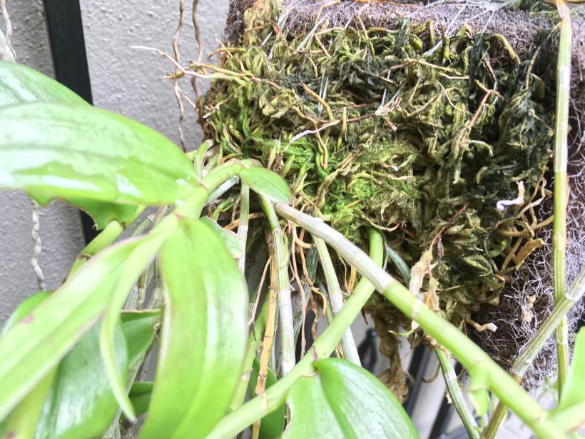 Changing moss on mounts-img_8823-jpg