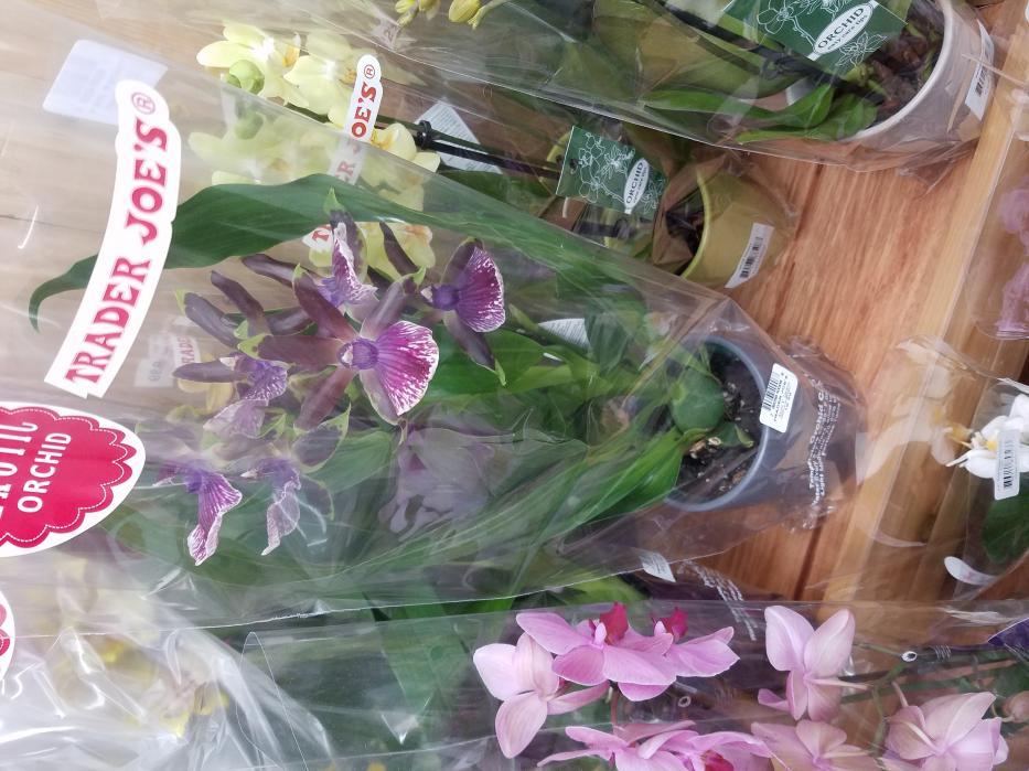 Trader Joe orchid-20170623_134031-jpg