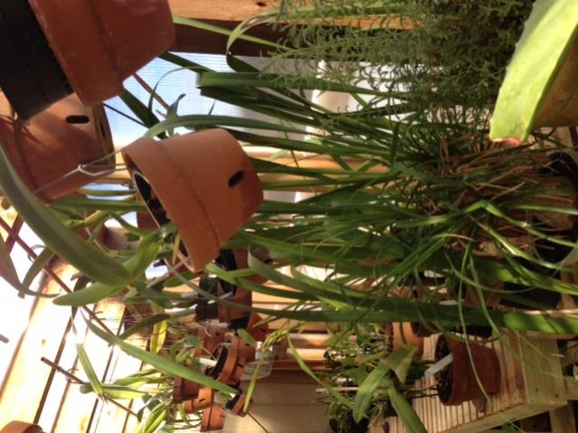 New Greenhouse-img_2159-jpg