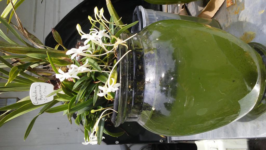 Sustainable Vase-20170712_131202-jpg