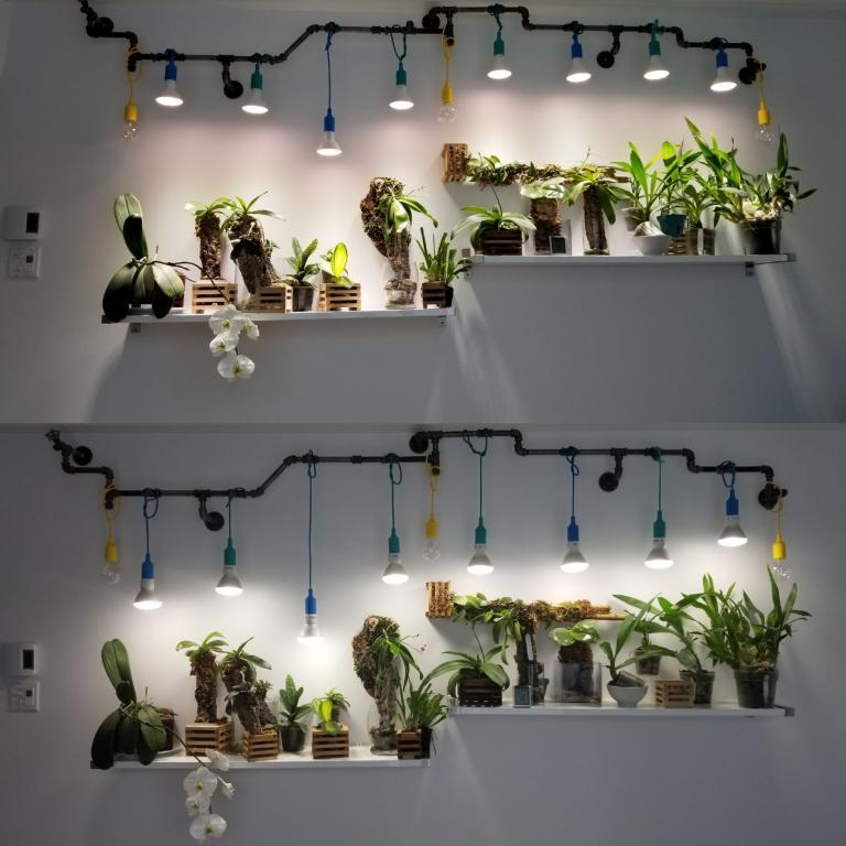 Very small LED or CFL grow light?-20170715_103320-jpg