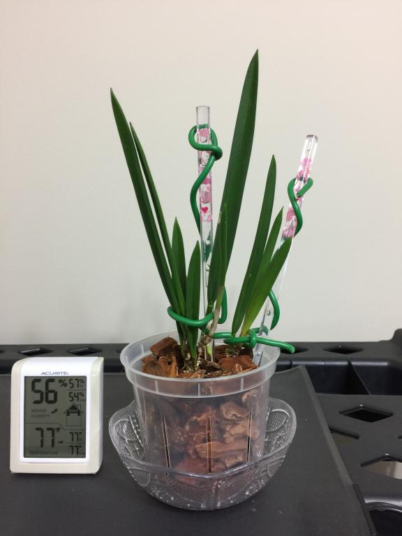 Shift from S/H to full water culture after (FWC), advice needed.-img_0882-jpg
