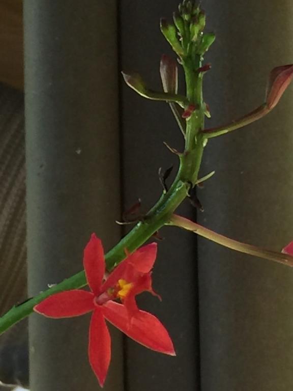 Dendrobium name help-img_2852-jpg