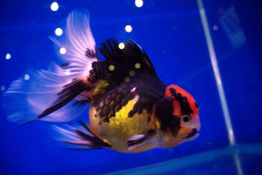 Cleo, is that you? Parts I & II-fish12-jpg