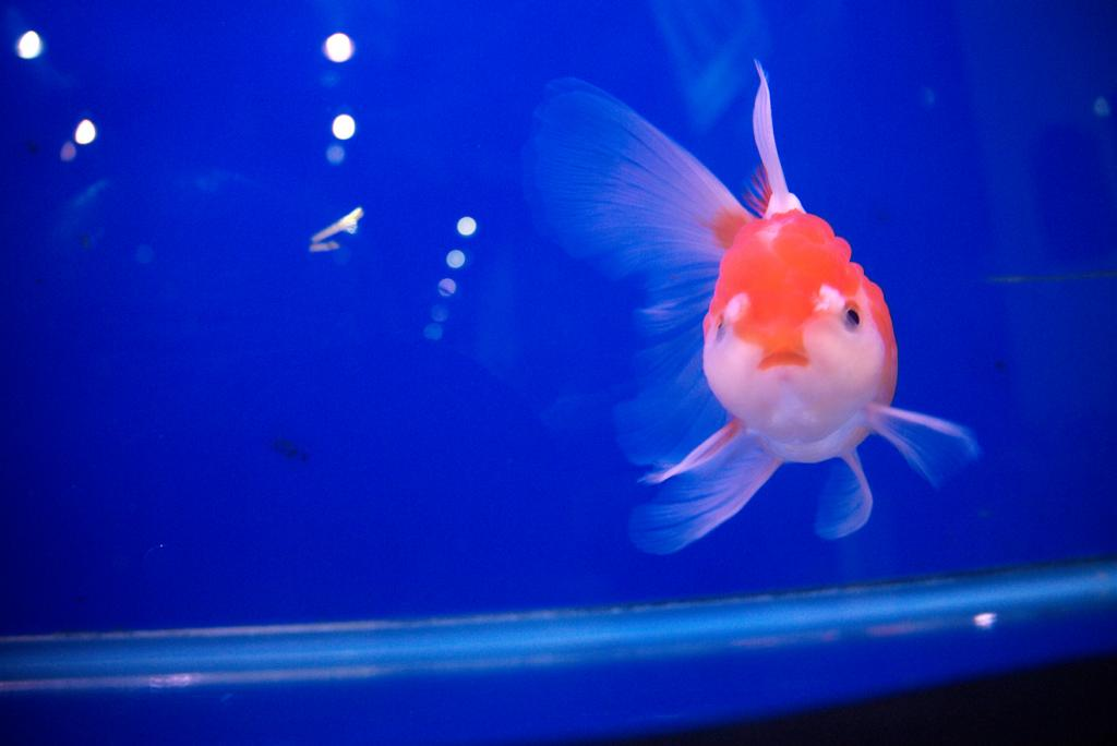 Cleo, is that you? Parts I & II-fish1-jpg