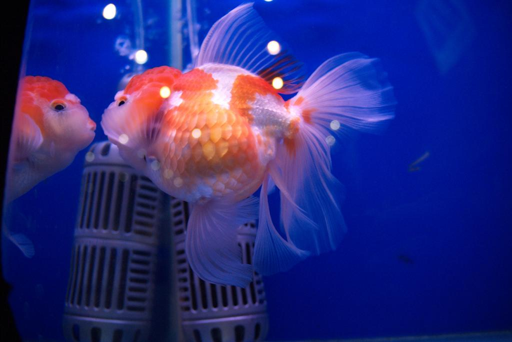 Cleo, is that you? Parts I & II-fish2-jpg