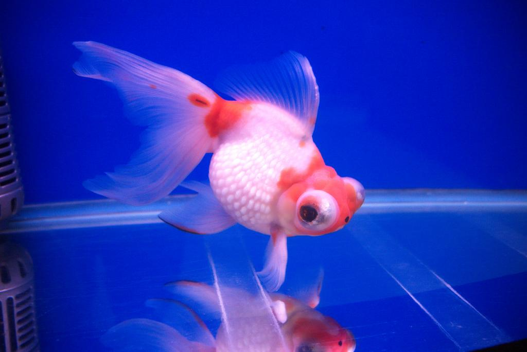 Cleo, is that you? Parts I & II-fish6-jpg