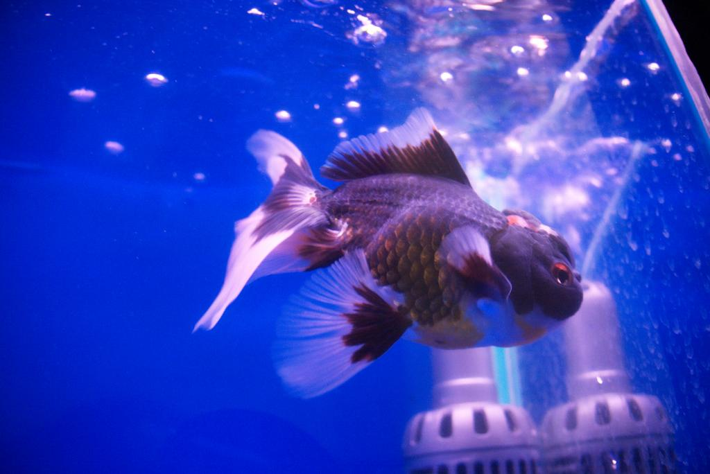 Cleo, is that you? Parts I & II-fish7-jpg