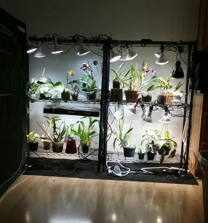 LED Grow light set up and thoughts.-20170807_205549-jpg