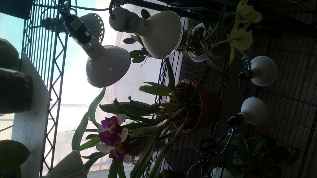LED Grow light set up and thoughts.-20170624_133453-jpg