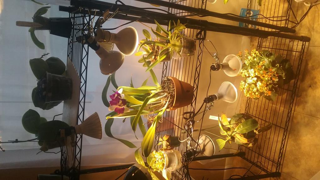 LED Grow light set up and thoughts.-20170619_185934-jpg