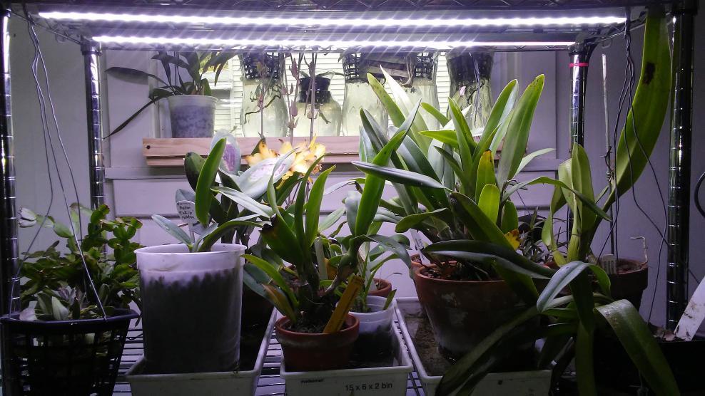 LED Grow light set up and thoughts.-20171025_085501-jpg