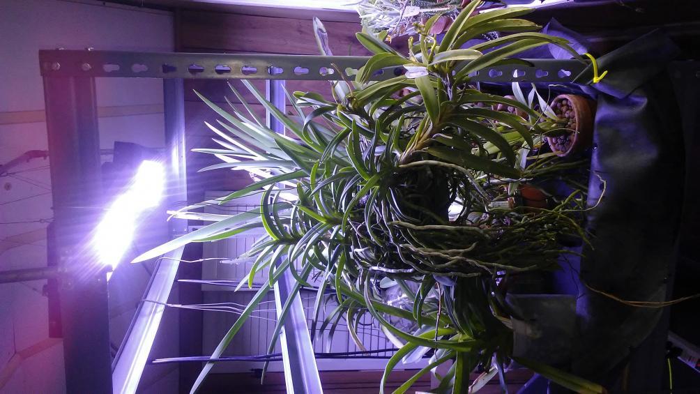 LED Grow light set up and thoughts.-1508937239650464137605-jpg
