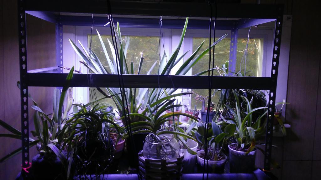 LED Grow light set up and thoughts.-1508937283386555098049-jpg