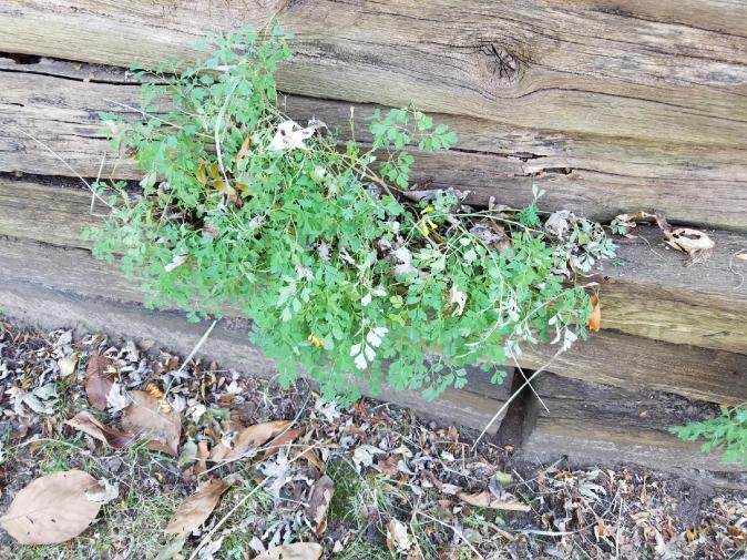 Last of the garden-resized_20171201_140723-jpg