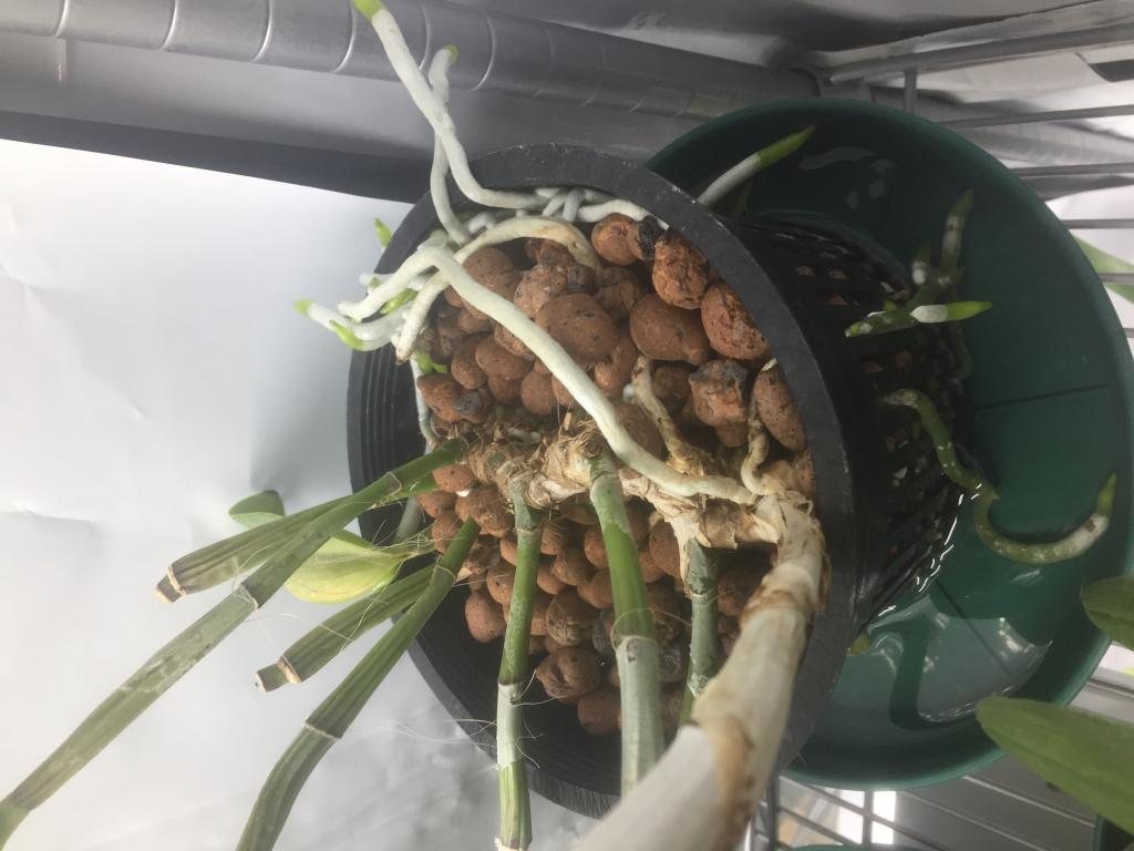AMAZING roots.. But how to repot?????-img_2863-jpg