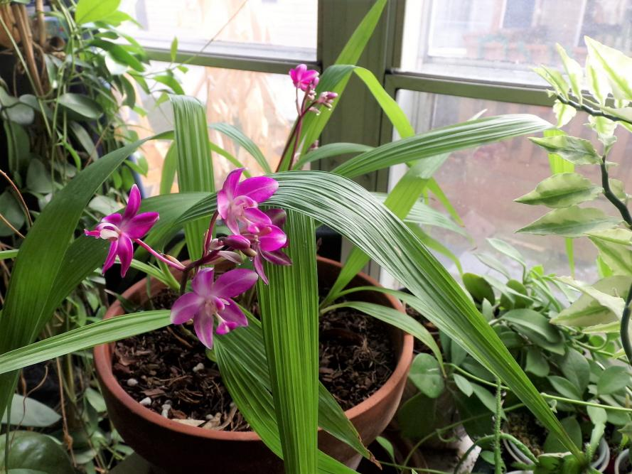 New Orchid-gedc0102-jpg