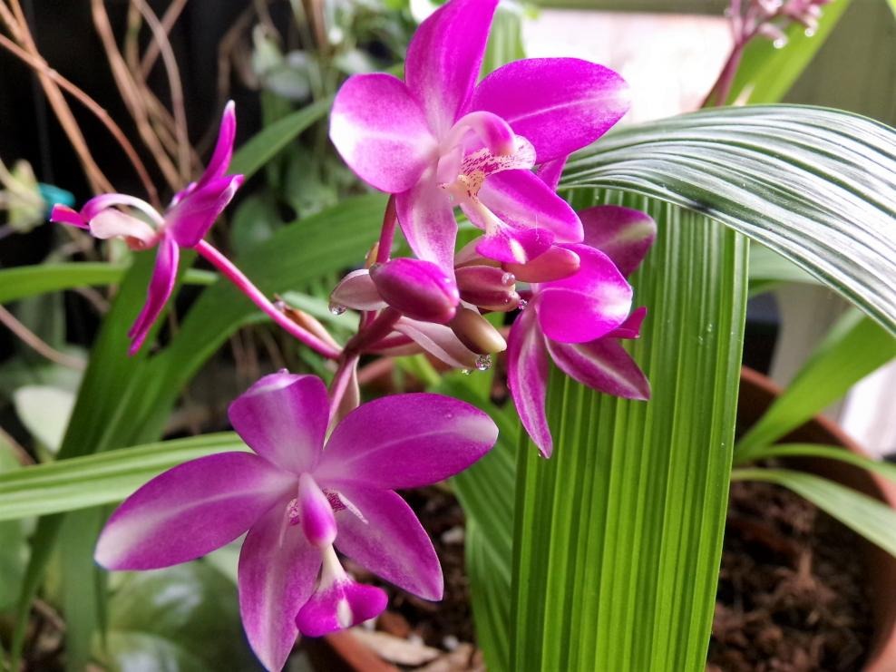 New Orchid-gedc0104-jpg