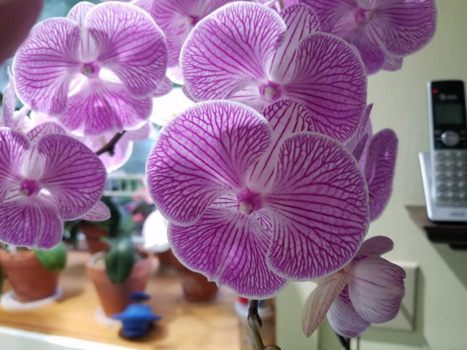 Please Post Your Most Bizarre Orchid Flower.-14974745878583-jpg