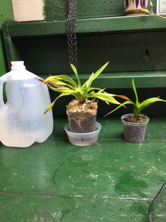 Inherited many orchids, need advice and identification help!-img_9698-jpg