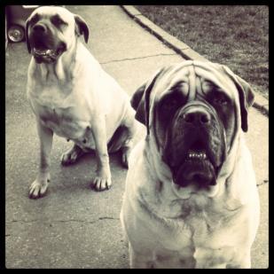 What do your dogs eat?-4b4e3d06-89e4-4c14-a7e1-95bbce265db4-jpg