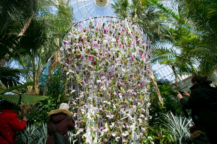 NY Botanical Garden Orchid Show!-nybg-orchid-2018-9771-jpg