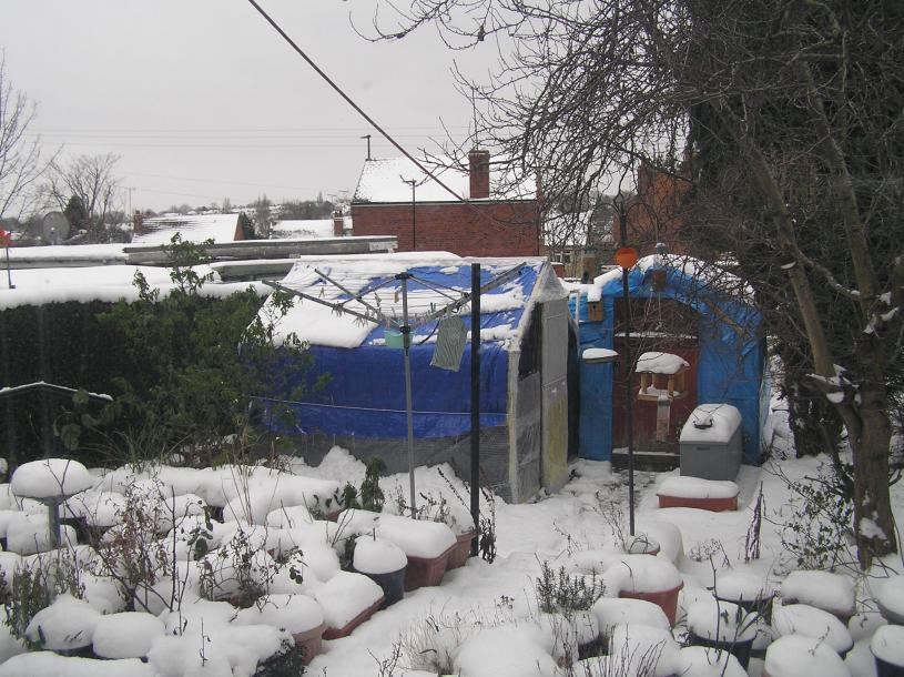 my small summer greenhouse-p3010134-jpg