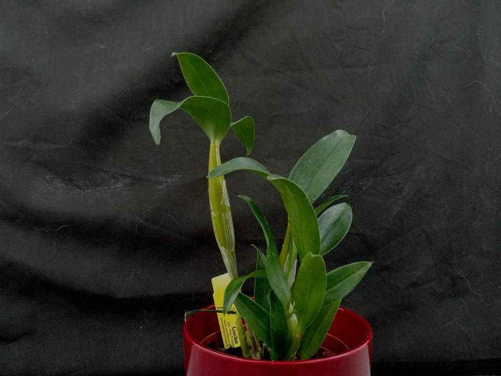 Orchideen Lucke-20180310_140225-jpg