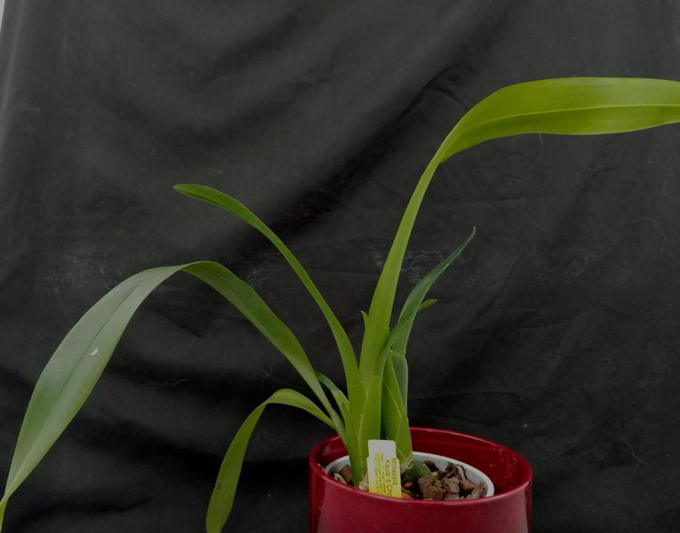 Orchideen Lucke-20180310_140319-jpg