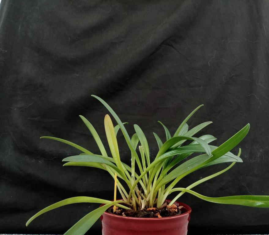 Orchideen Lucke-20180310_135929-jpg