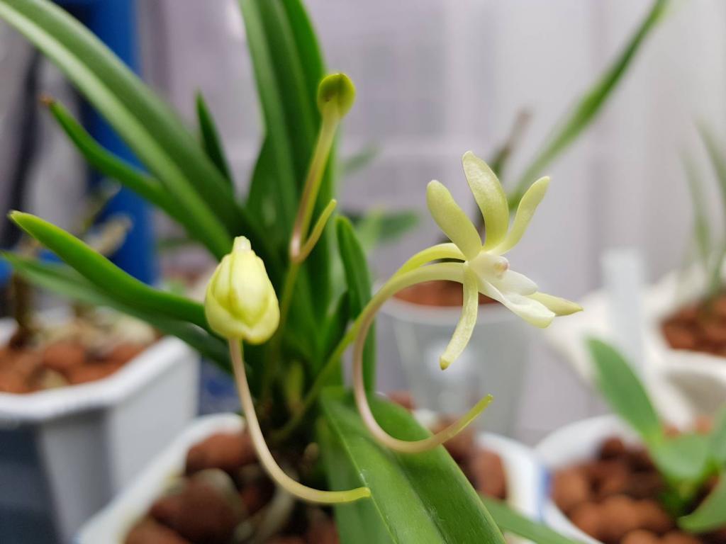 May blooms!-s_7893895538960-jpg