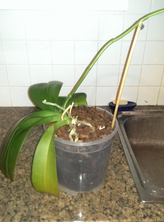 Help! Repotted orchid, damaged roots and now they got mould-imag3777-jpg